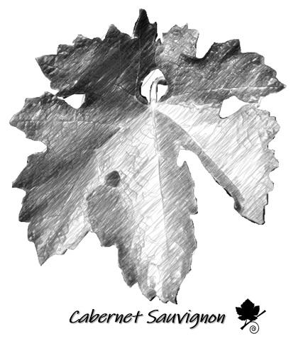 Cabernet Sauvignon - foglia