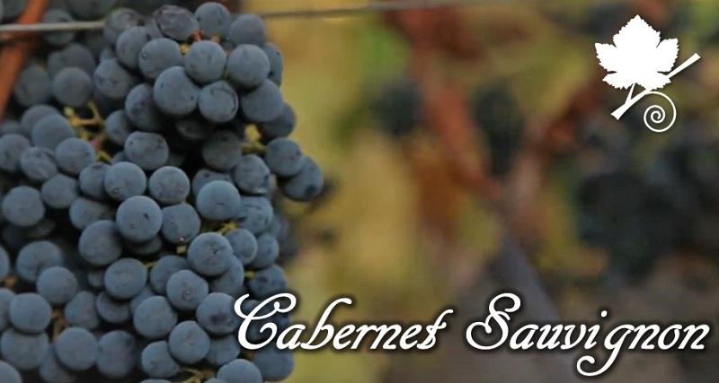 Cabernet Sauvignon