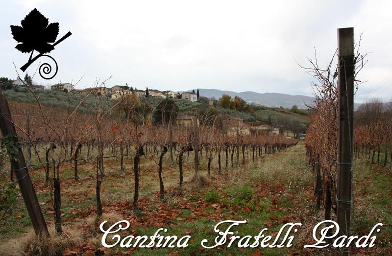 Cantina Fratelli Pardi - Vigneti
