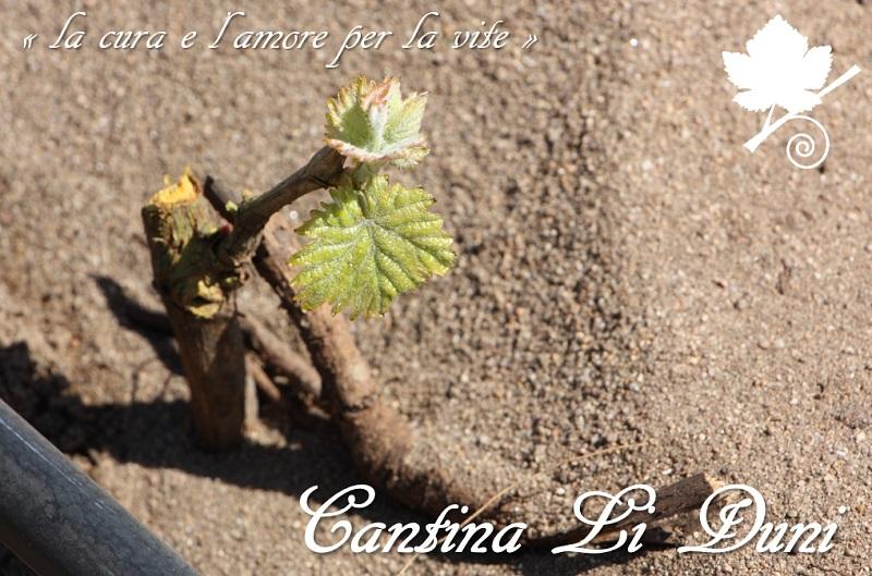 Cantina Li Duni - la cura e l'amore per la vite