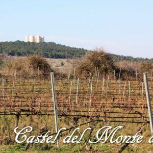 Castel del Monte Nero di Troia DOCG