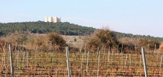 Castel del Monte DOC