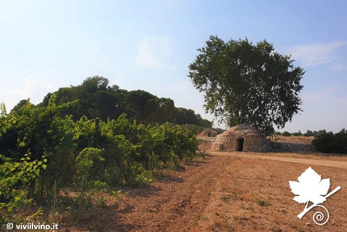 Castel del Monte Nero di Troia Riserva DOCG le murgie