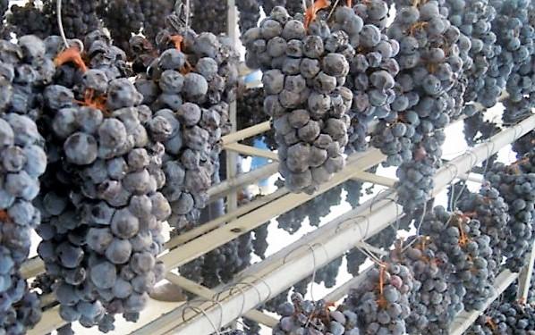 Elba Aleatico Passito DOCG - passimento uve