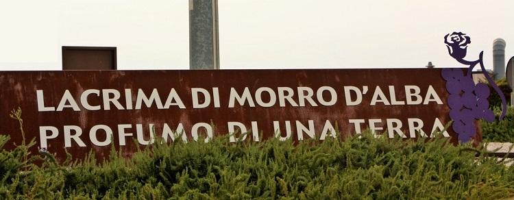 Lacrima di Morro d'Alba DOC - entrata nel comune
