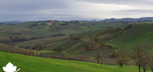 Oltrepò Pavese Pinot Grigio DOC