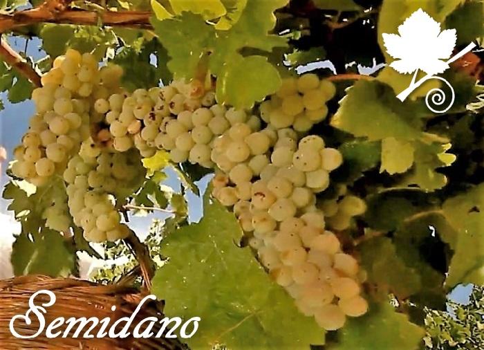 Semidano grappoli