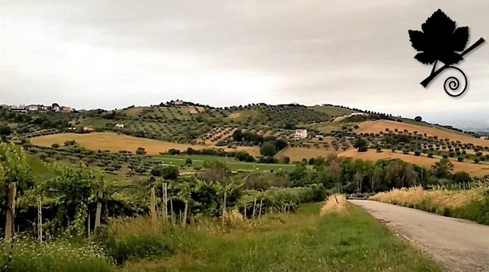 Trebbiano d'Abruzzo DOC Collline abruzzesi