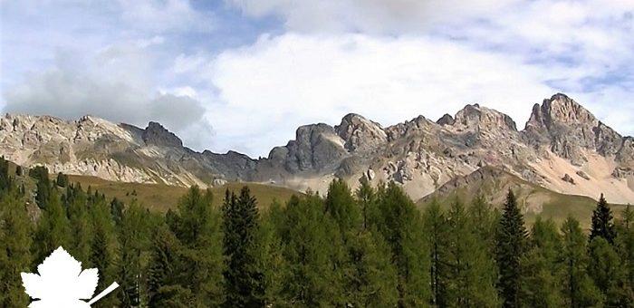 Trentino DOC