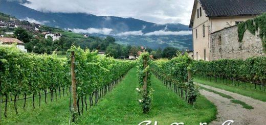Valle d'Aosta DOC - vigneti
