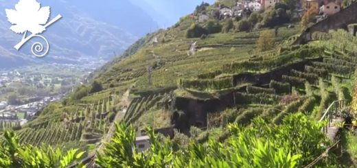 Valtellina Superiore DOCG
