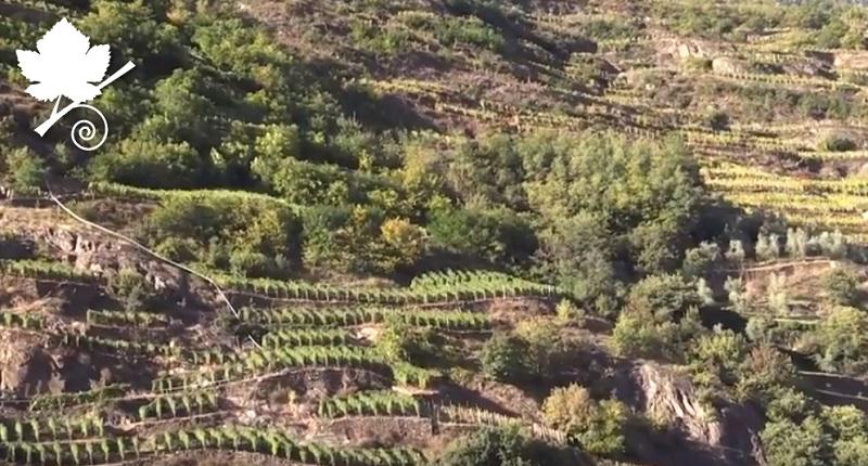 Valtellina Superiore DOCG viticoltura eroica