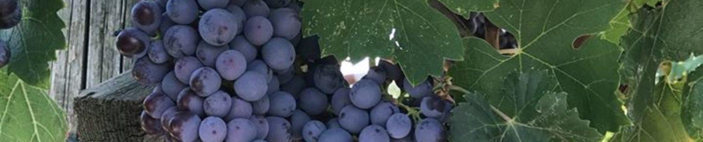 Vivi il Vino
