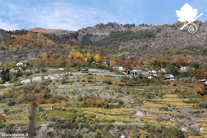 Valle d'Aosta - vigneti su pendii 2