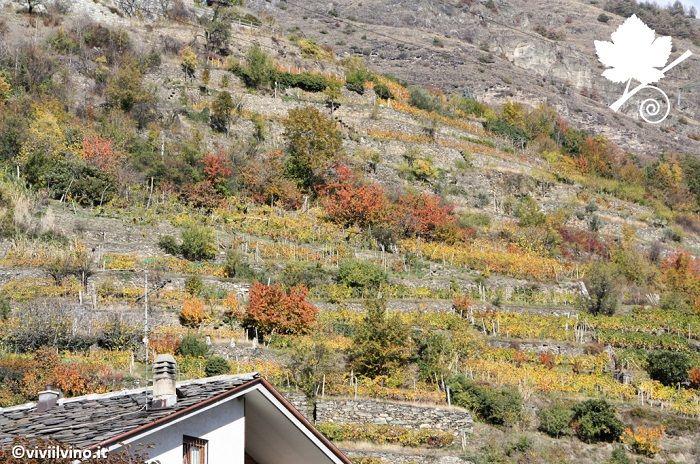 Valle d'Aosta - vigneti su pendii scoscesi