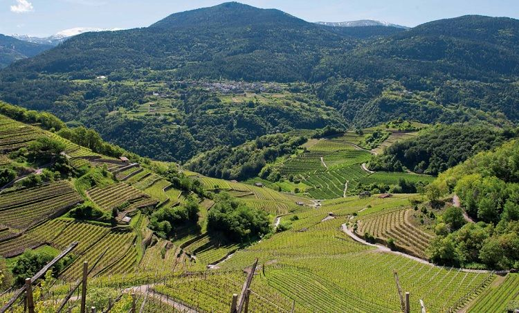 Valle di Cembra Trentino - produzione del Muller Thurgau