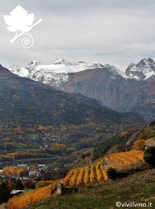 valle d'Aosta - vigneti