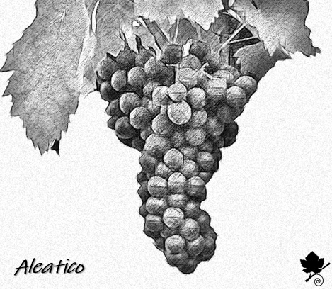 Aleatico - grappolo