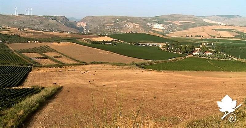 Sicilia DOC