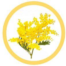 mimosa sentore