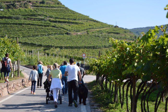 Marcia dell'Uva_Archivio Strada del Vino e dei Sapori del Trentino