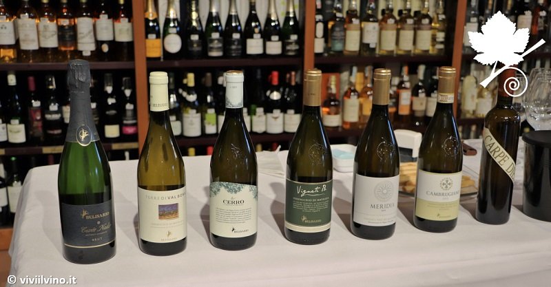 Cantina Belisario - I vini della cantina