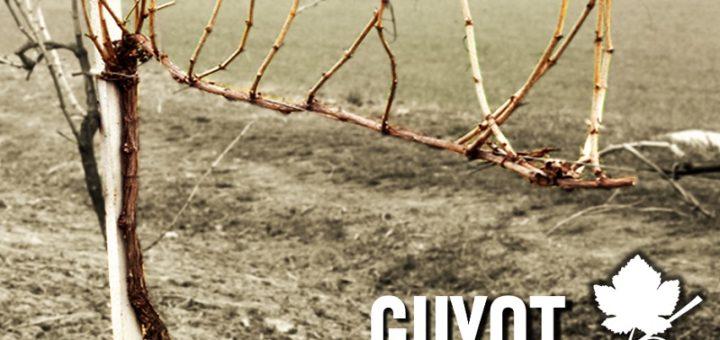 Guyot