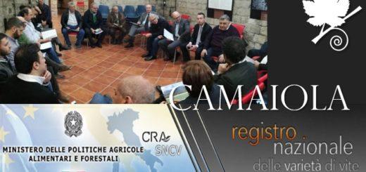 Il vitigno Camaiola verrà presto proposto al Registro Nazionale delle Varietà della Vite