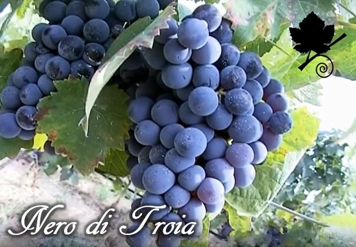 nero di troa o uva di troia
