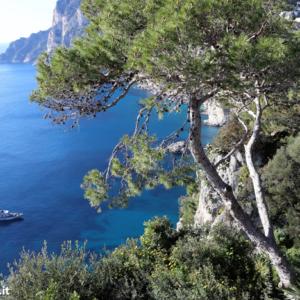 Capri DOC