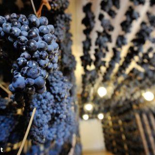 Appassimento delle uve - vernaccia nera