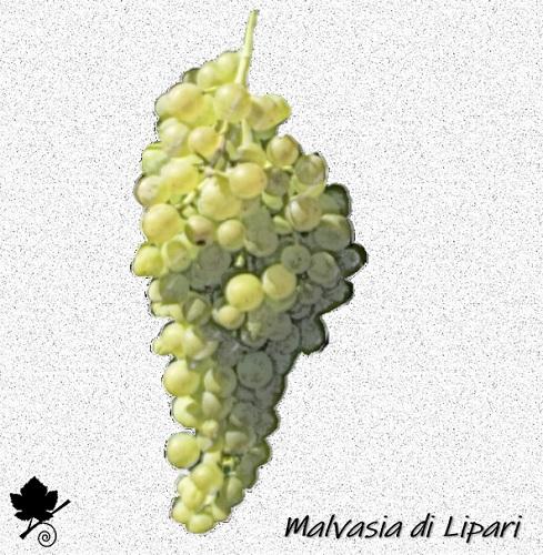 Malvasia di Lipari - vitigno