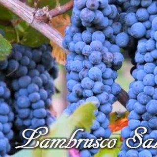 Lambrusco Salamino