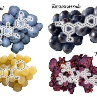 I Polifenoli del vino, Flavonoli, Antociani e Tannini