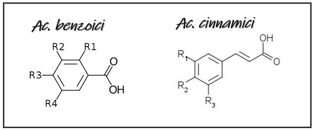 acidi fenolici