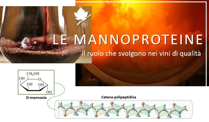 Le Mannoproteine, cosa sono ed il ruolo che svolgono nei vini di qualità