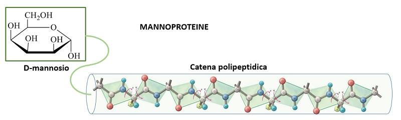 mannoproteine