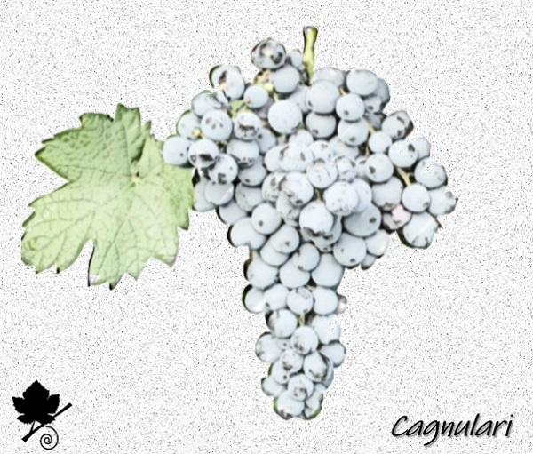 Cagnulari - vitigno