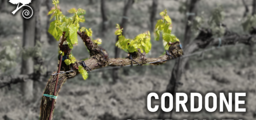 Cordone Speronato - sistema di allevamento