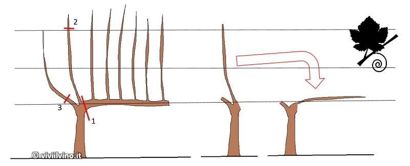 Potatura a cordone speronato