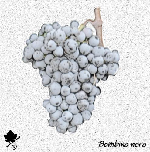 Bombino nero - vitigno