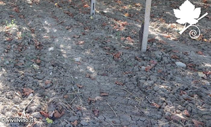 Effetto del suolo nella produzione del vino