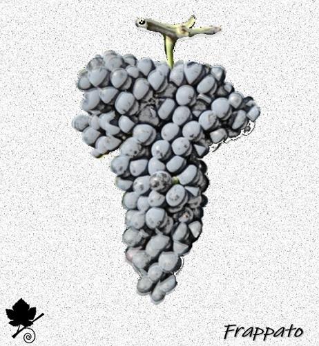 Frappato - vitigno